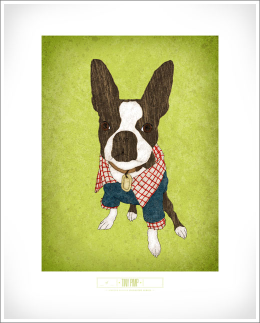 Tiny Pimp Boston Terrier artwork © RAWTOASTDESIGN